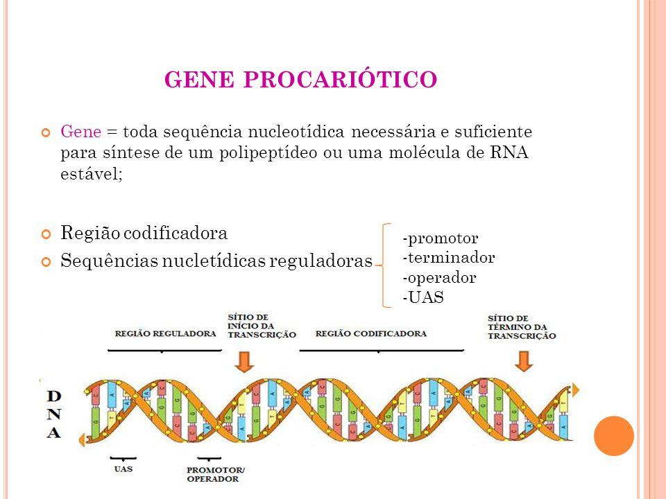 gene procariótico Região codificadora