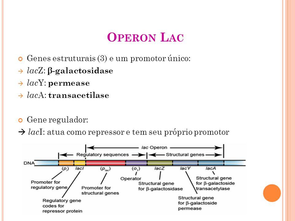 Operon Lac Genes estruturais (3) e um promotor único: