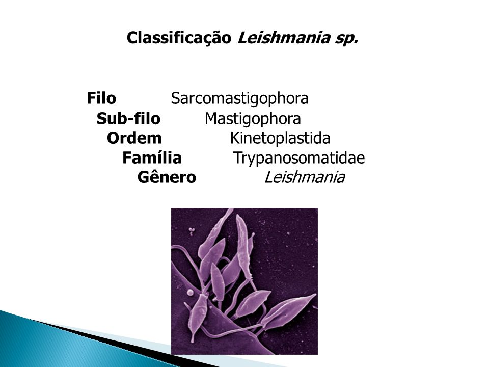 Classificação Leishmania sp.