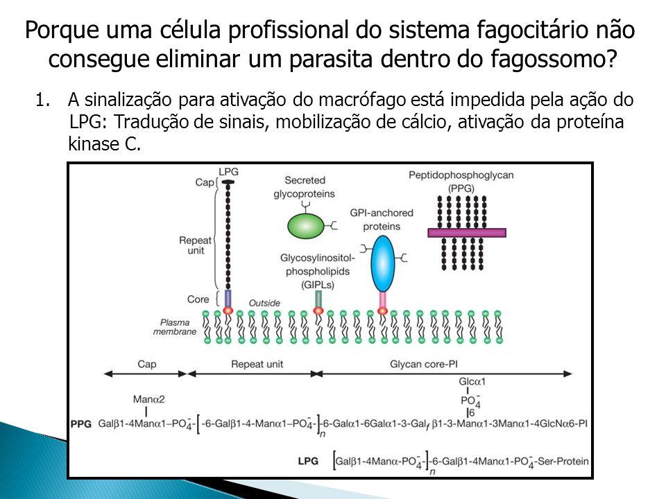 Porque uma célula profissional do sistema fagocitário não