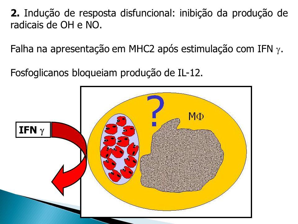 2. Indução de resposta disfuncional: inibição da produção de radicais de OH e NO.
