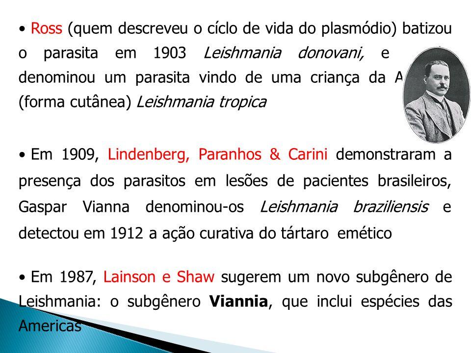 Ross (quem descreveu o cíclo de vida do plasmódio) batizou o parasita em 1903 Leishmania donovani, e Wright denominou um parasita vindo de uma criança da Armênia (forma cutânea) Leishmania tropica