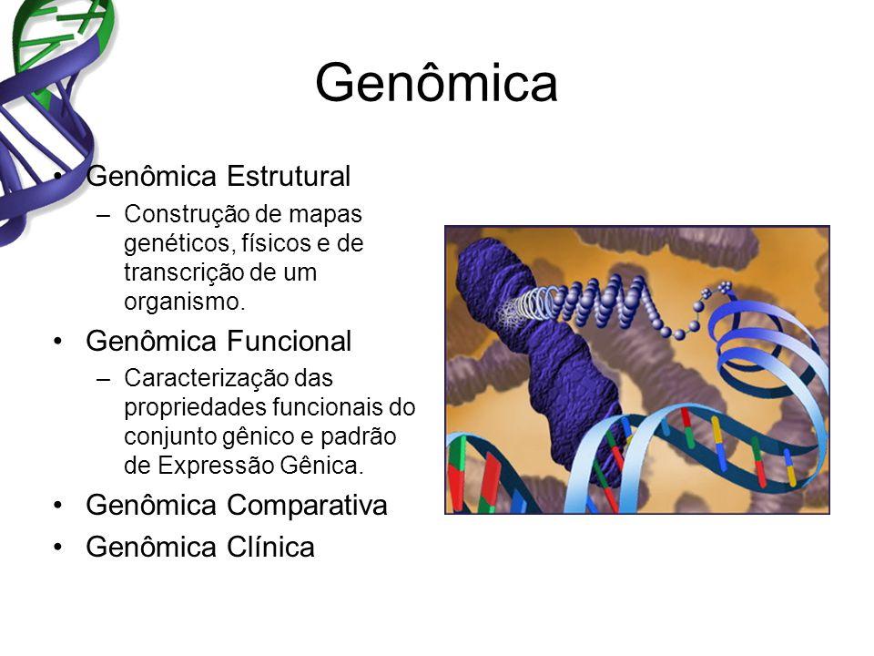 Genômica Genômica Estrutural Genômica Funcional Genômica Comparativa