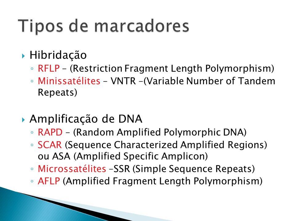 Tipos de marcadores Hibridação Amplificação de DNA