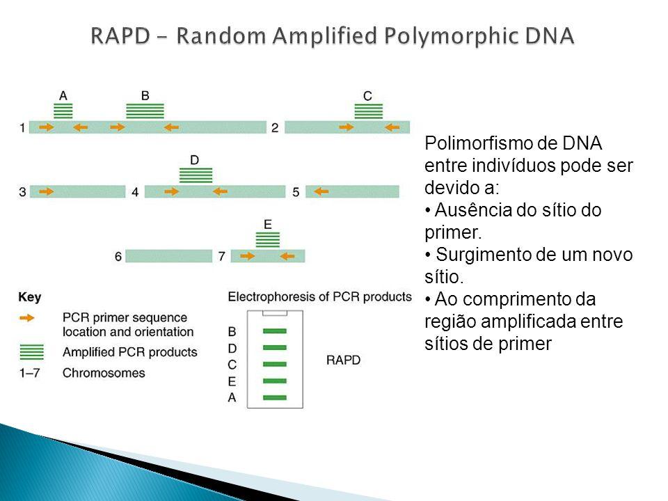 RAPD - Random Amplified Polymorphic DNA