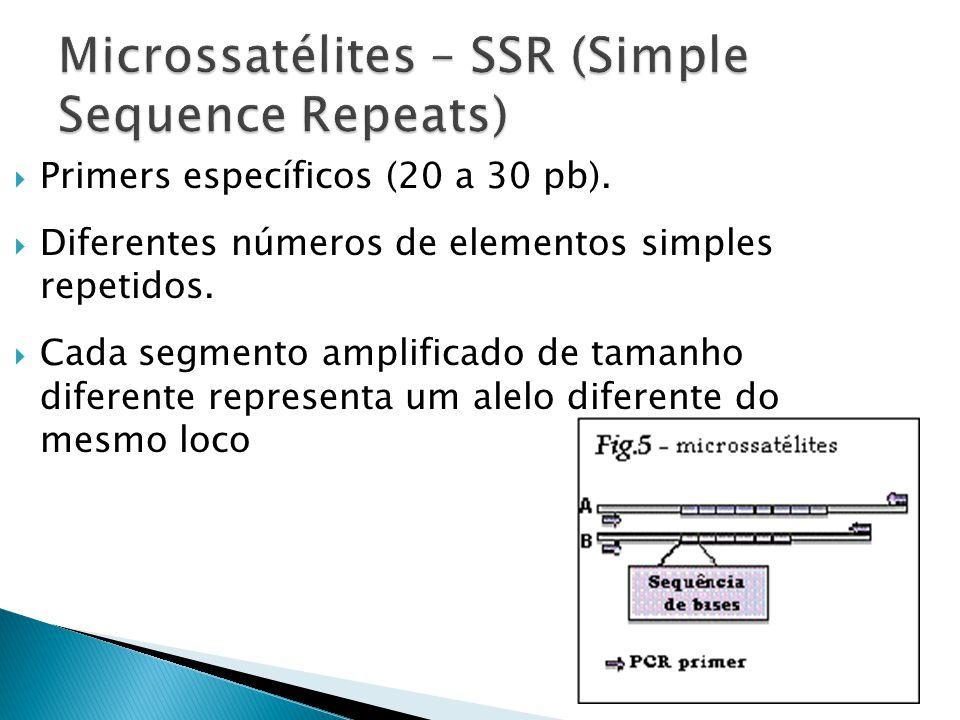 Microssatélites – SSR (Simple Sequence Repeats)