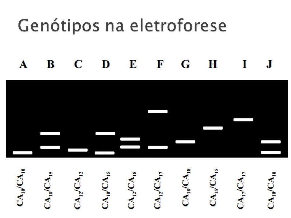 Genótipos na eletroforese