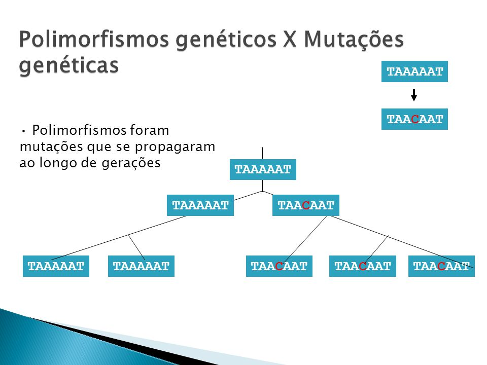 Polimorfismos genéticos X Mutações genéticas