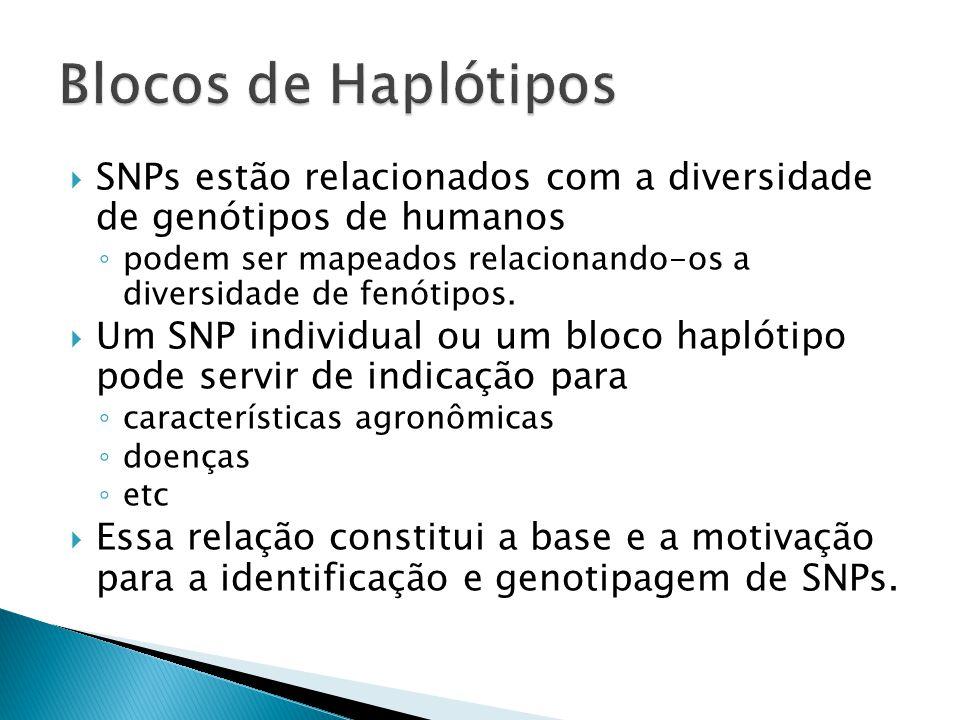 Blocos de Haplótipos SNPs estão relacionados com a diversidade de genótipos de humanos.