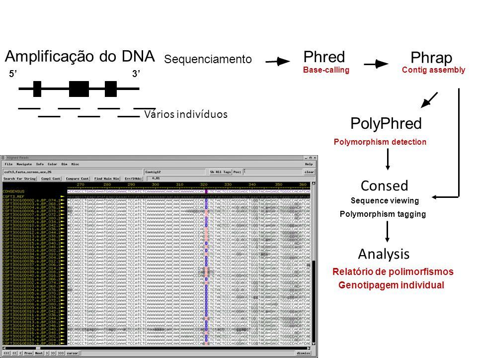 Amplificação do DNA Phred Phrap PolyPhred Consed Analysis