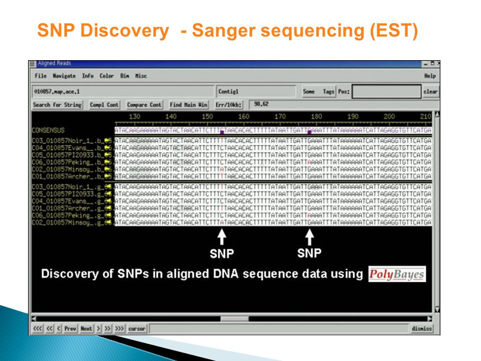 SNP Discovery - Sanger sequencing (EST)