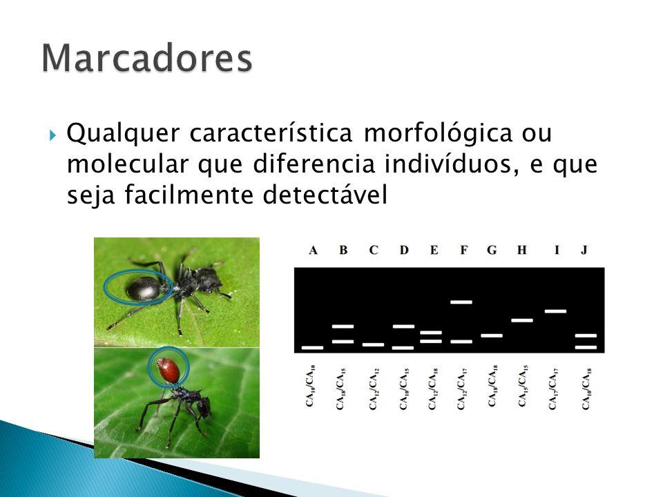 Marcadores Qualquer característica morfológica ou molecular que diferencia indivíduos, e que seja facilmente detectável.