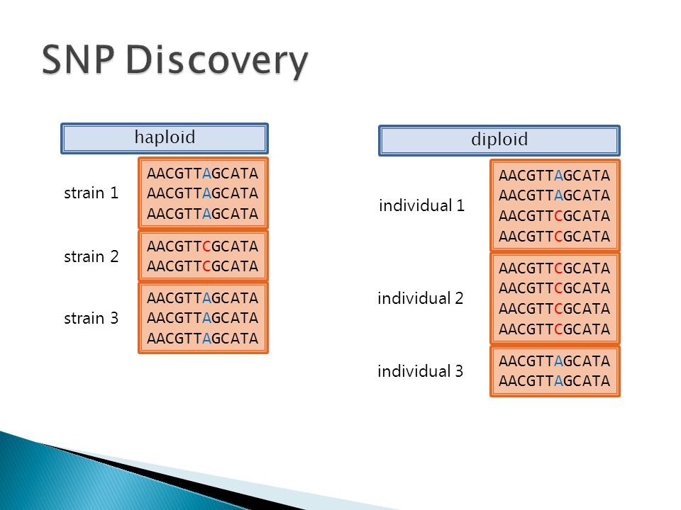 SNP Discovery haploid diploid AACGTTAGCATA AACGTTAGCATA strain 1