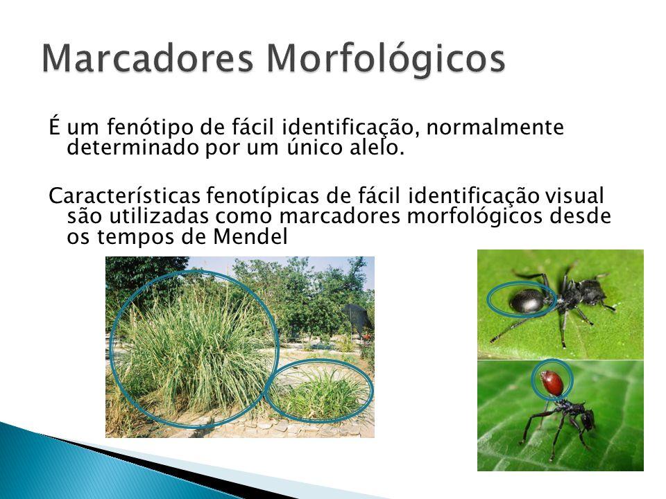 Marcadores Morfológicos