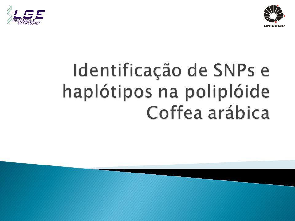 Identificação de SNPs e haplótipos na poliplóide Coffea arábica