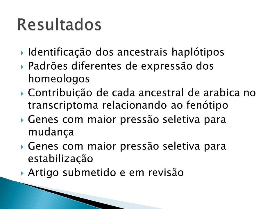 Resultados Identificação dos ancestrais haplótipos
