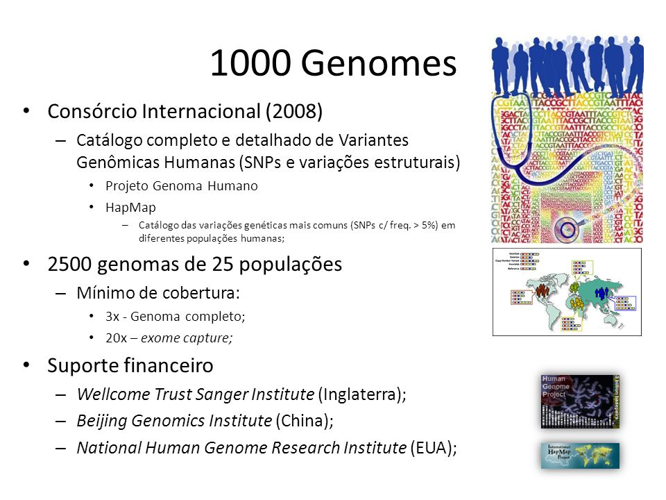 1000 Genomes Consórcio Internacional (2008)