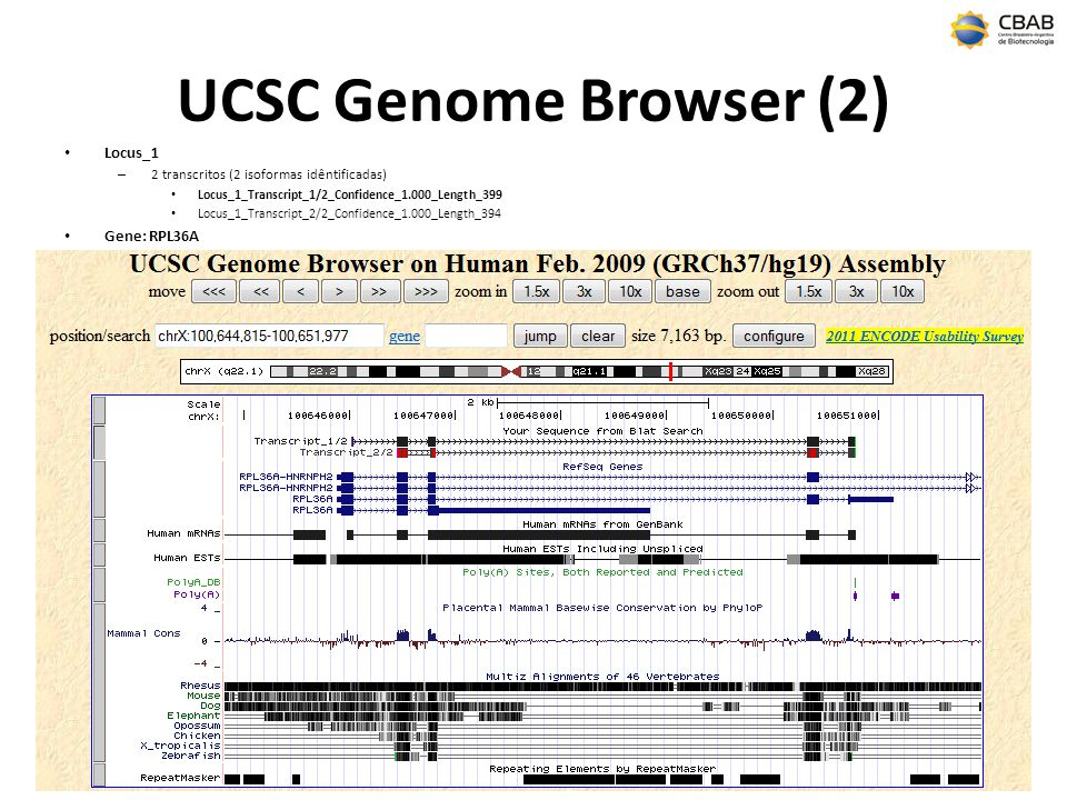 UCSC Genome Browser (2) Locus_1 Gene: RPL36A