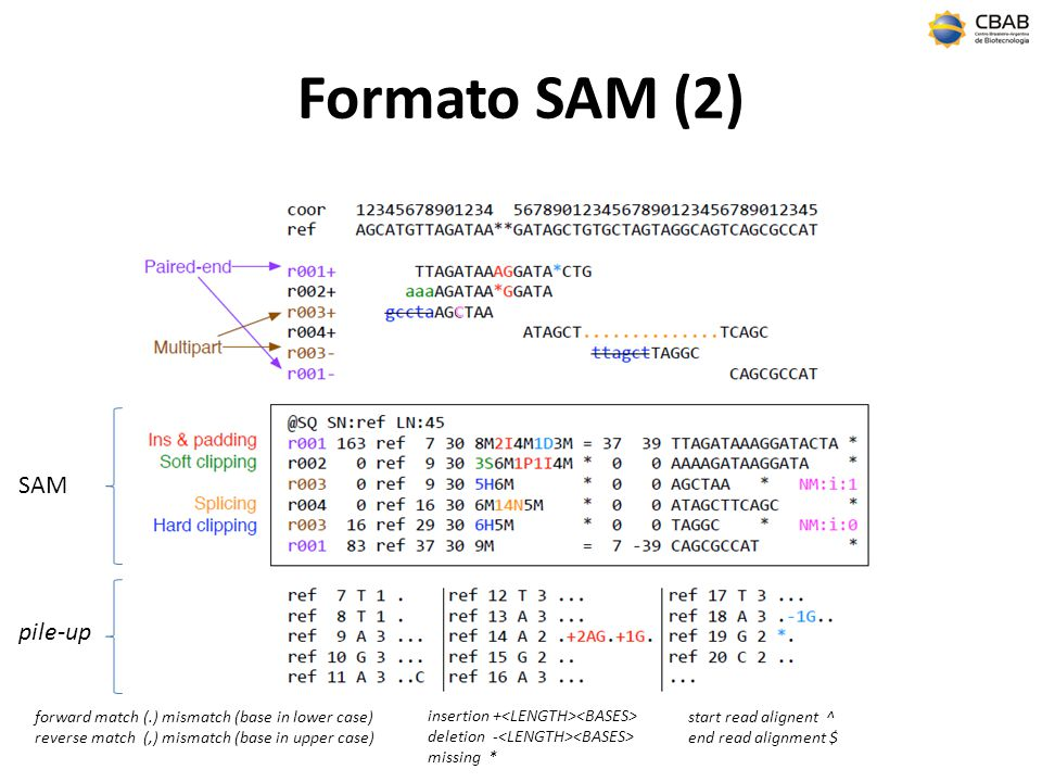 Formato SAM (2) SAM pile-up C