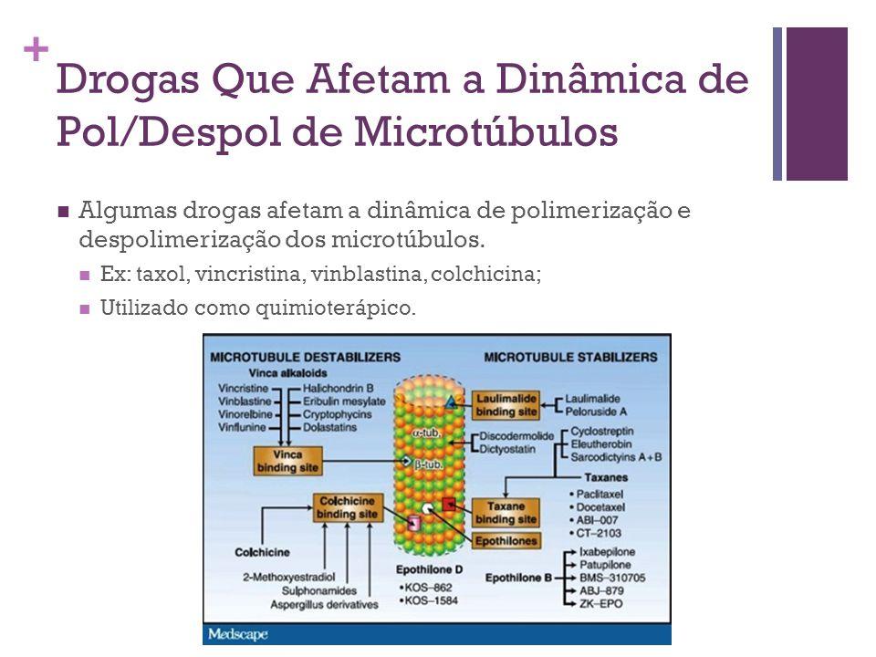 Drogas Que Afetam a Dinâmica de Pol/Despol de Microtúbulos