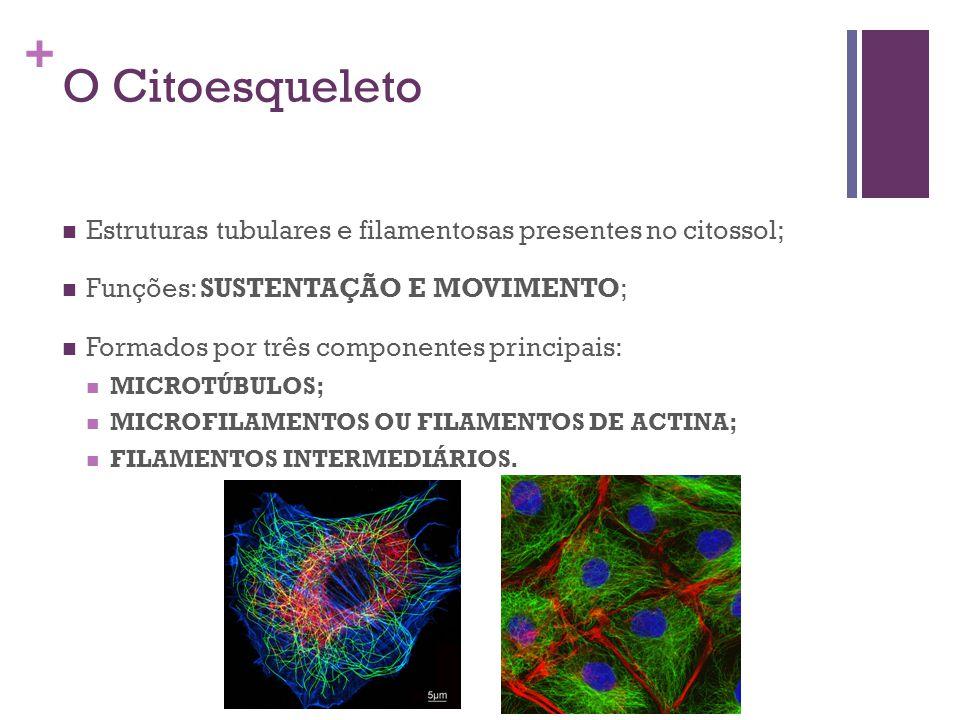 O Citoesqueleto Estruturas tubulares e filamentosas presentes no citossol; Funções: SUSTENTAÇÃO E MOVIMENTO;