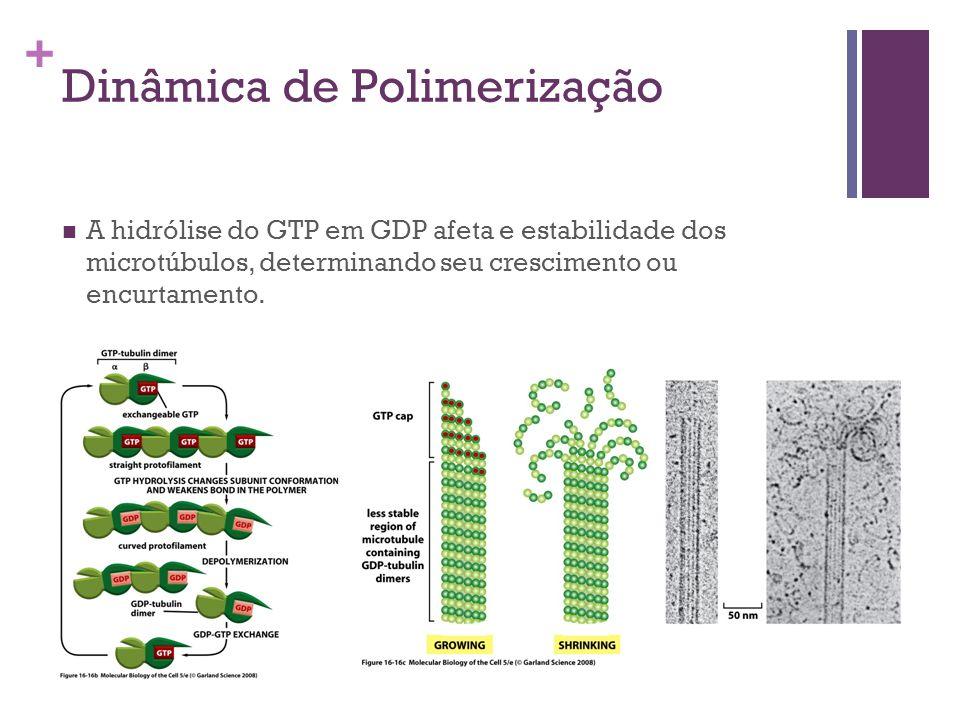 Dinâmica de Polimerização