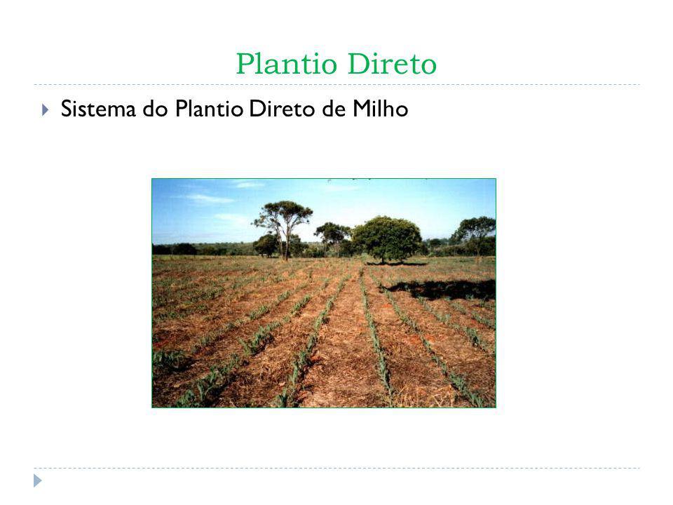 Plantio Direto Sistema do Plantio Direto de Milho