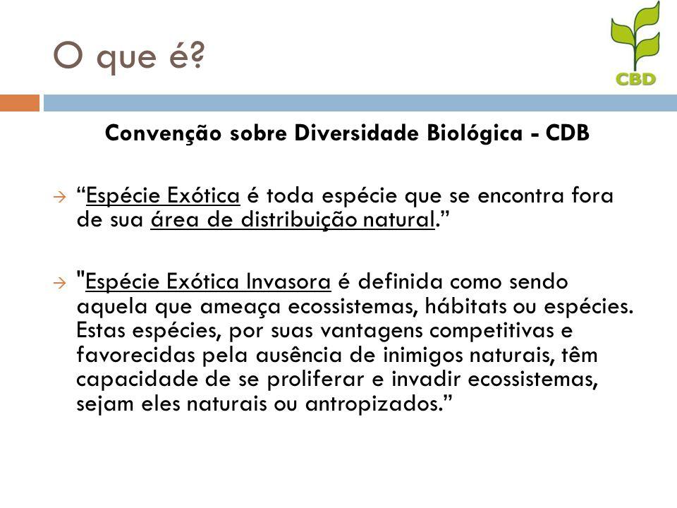 Convenção sobre Diversidade Biológica - CDB