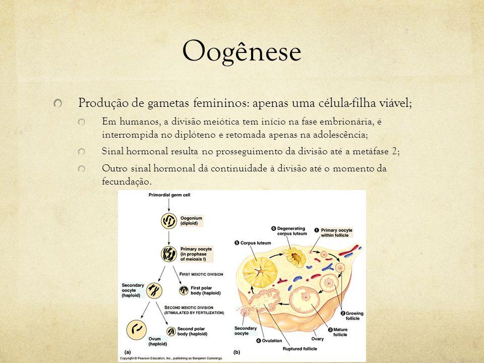 Oogênese Produção de gametas femininos: apenas uma célula-filha viável;