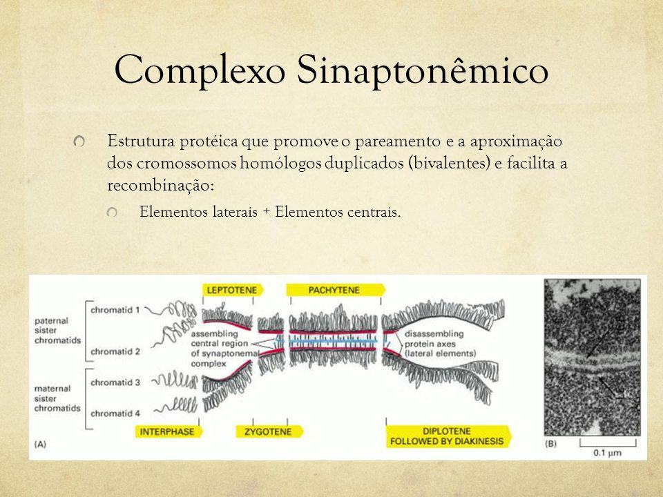 Complexo Sinaptonêmico