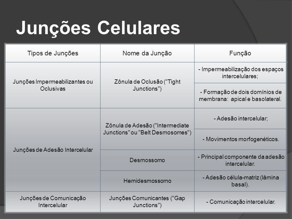 Junções Celulares Tipos de Junções Nome da Junção Função