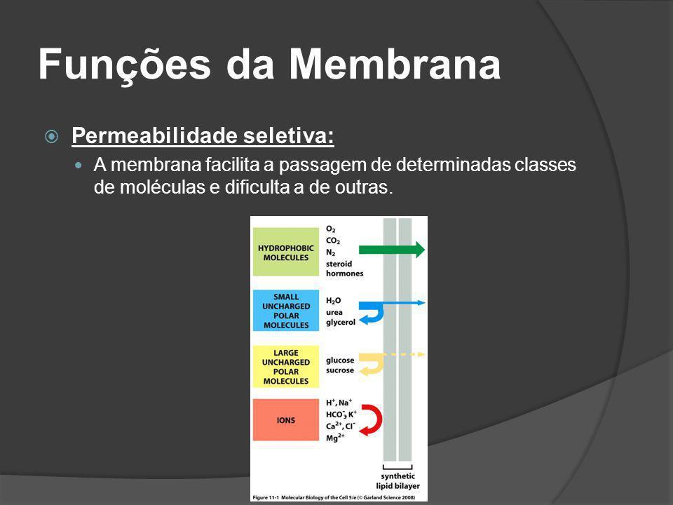 Funções da Membrana Permeabilidade seletiva: