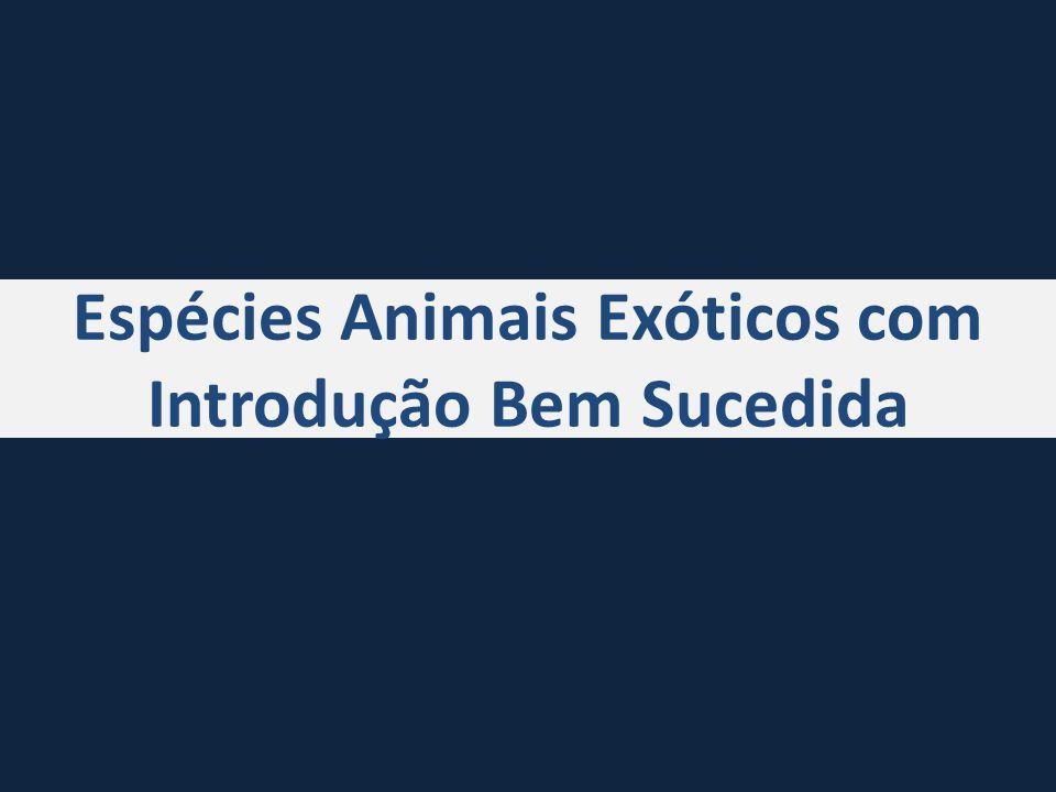 Espécies Animais Exóticos com Introdução Bem Sucedida