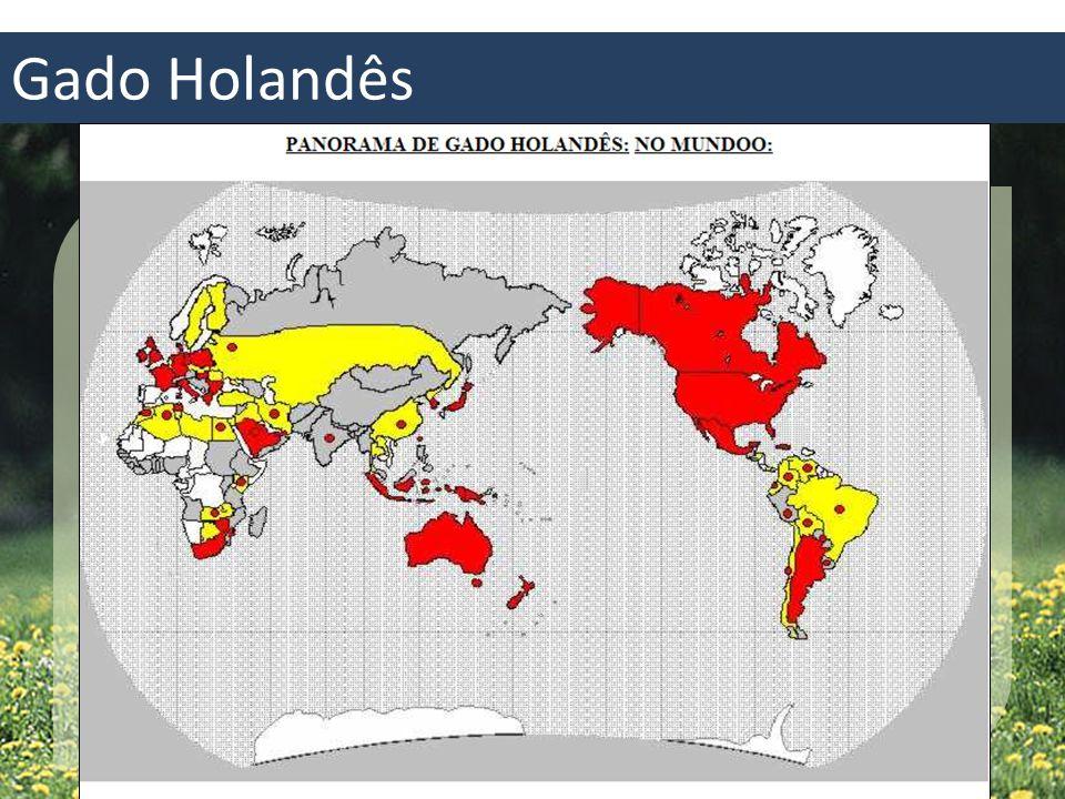 Gado Holandês Origem incerta 2000 a.C