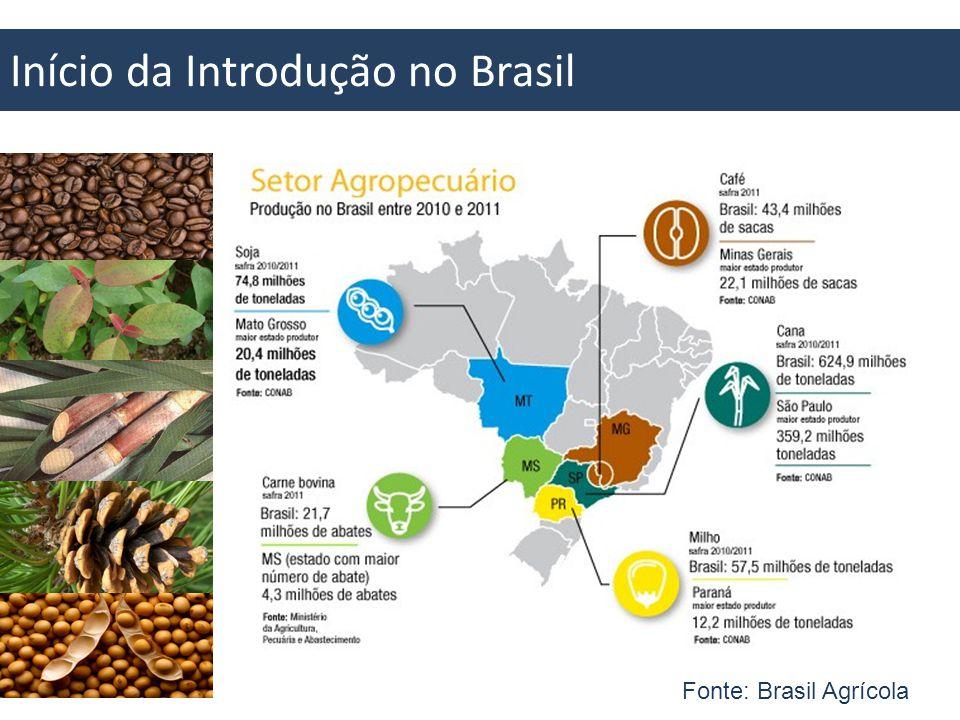 Início da Introdução no Brasil