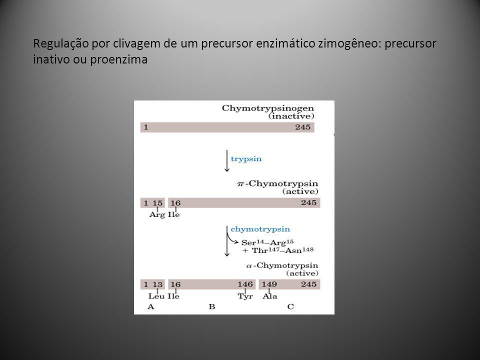 Regulação por clivagem de um precursor enzimático zimogêneo: precursor inativo ou proenzima