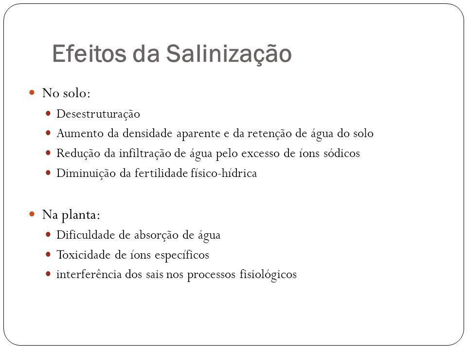 Efeitos da Salinização