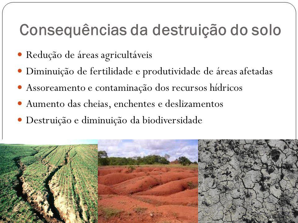 Consequências da destruição do solo