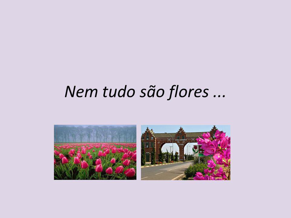 Nem tudo são flores ...