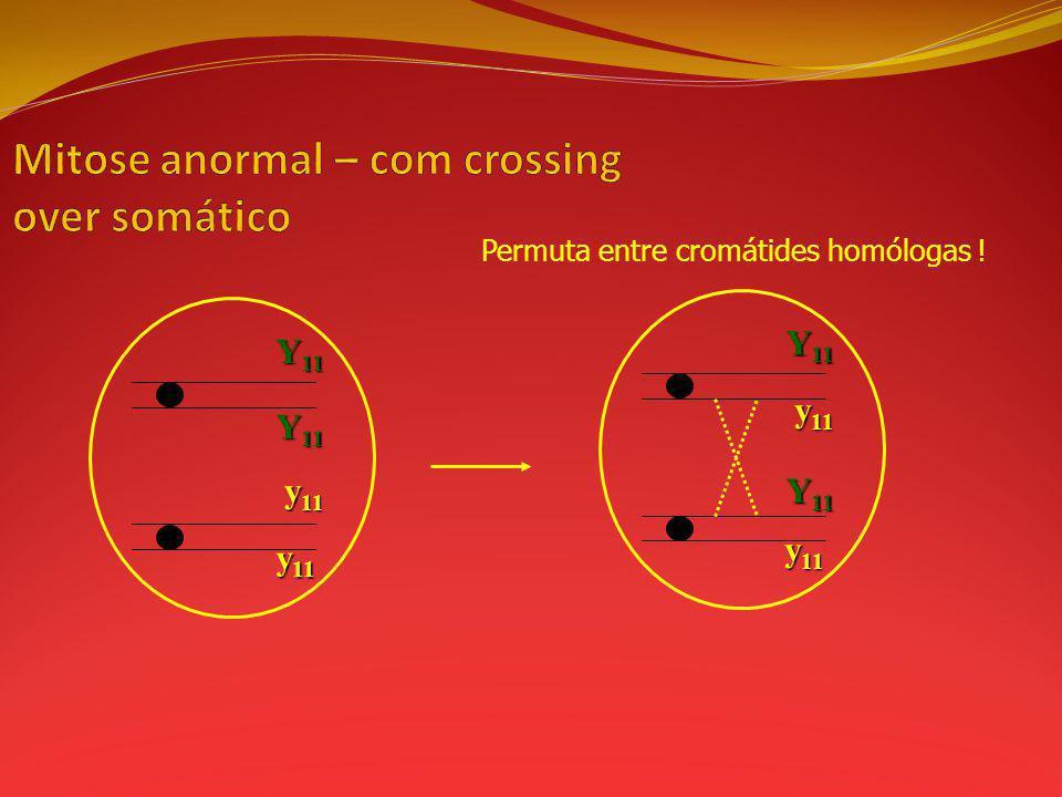 Mitose anormal – com crossing over somático