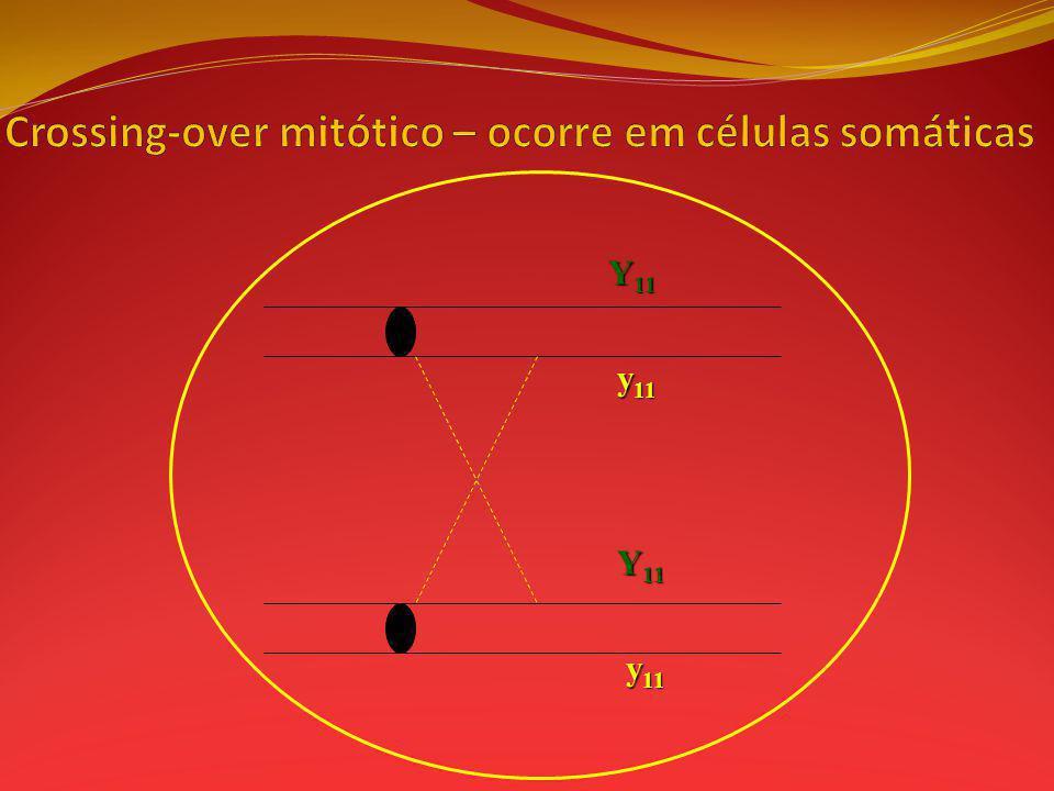 Crossing-over mitótico – ocorre em células somáticas