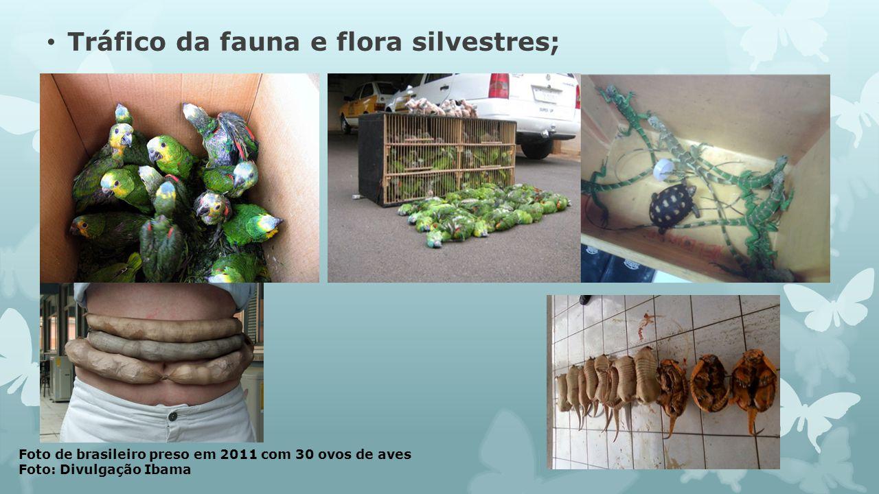 Tráfico da fauna e flora silvestres;