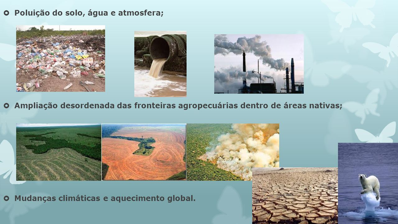 Poluição do solo, água e atmosfera;