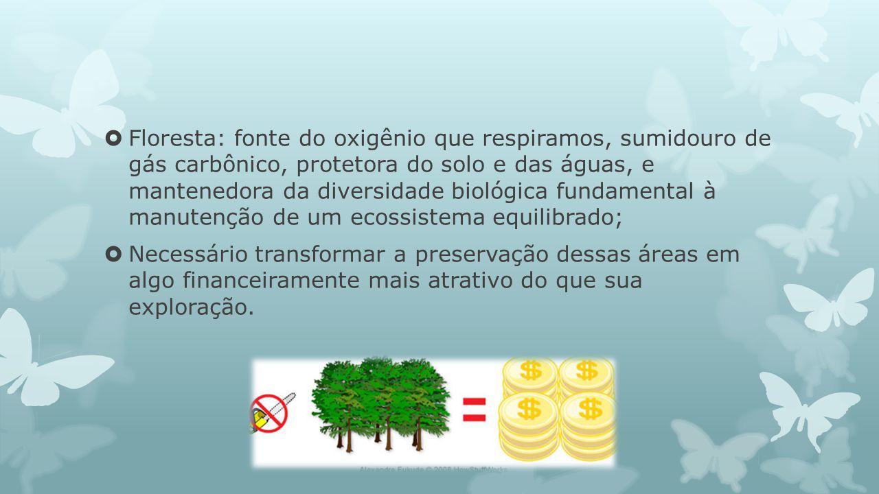 Floresta: fonte do oxigênio que respiramos, sumidouro de gás carbônico, protetora do solo e das águas, e mantenedora da diversidade biológica fundamental à manutenção de um ecossistema equilibrado;