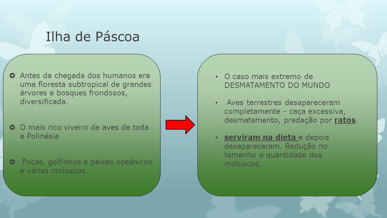 Ilha de Páscoa Antes da chegada dos humanos era uma floresta subtropical de grandes árvores e bosques frondosos, diversificada.