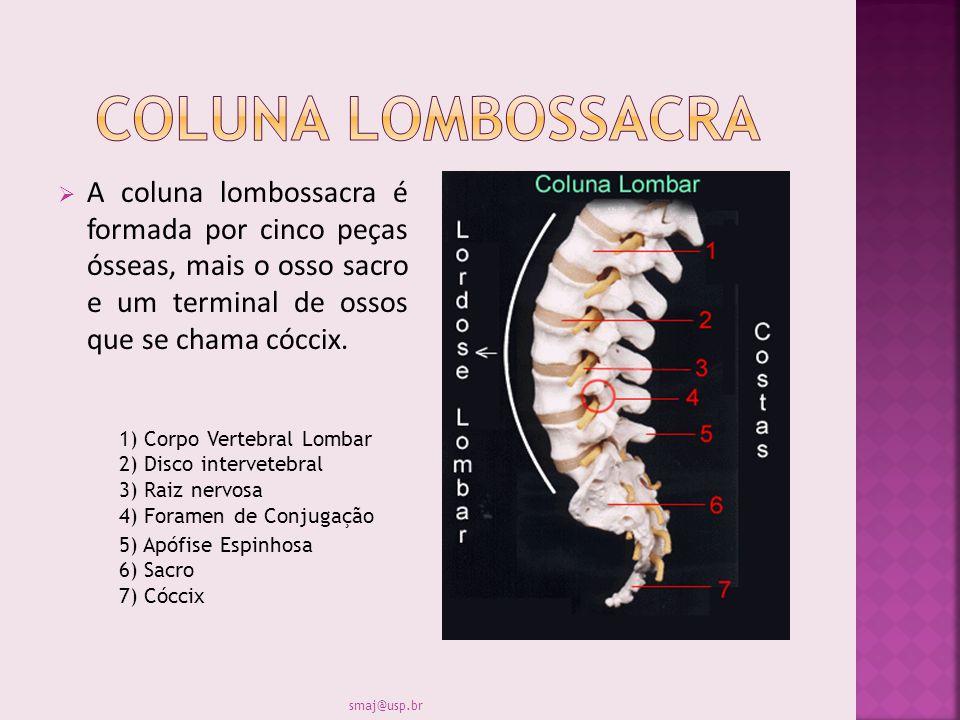 Coluna lombossacra A coluna lombossacra é formada por cinco peças ósseas, mais o osso sacro e um terminal de ossos que se chama cóccix.