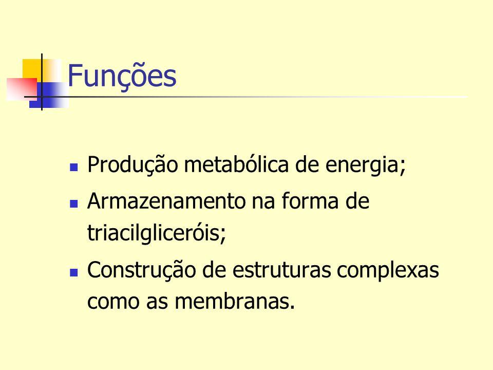 Funções Produção metabólica de energia;