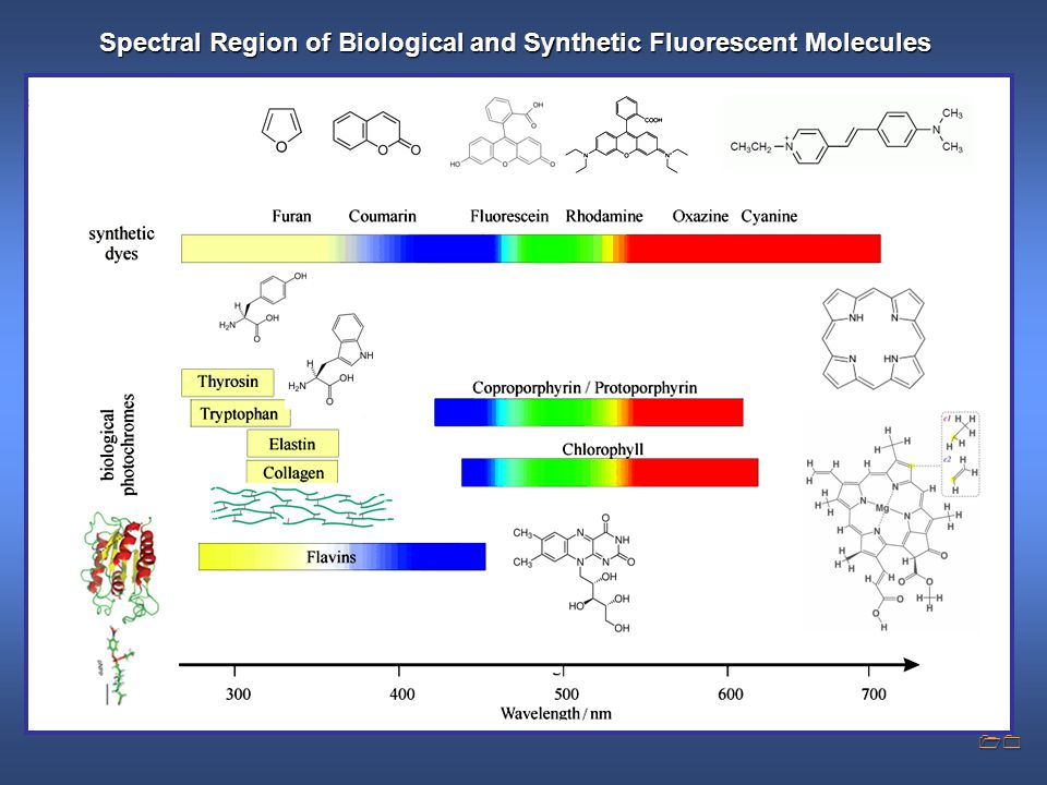 Spectral Region of Biological and Synthetic Fluorescent Molecules