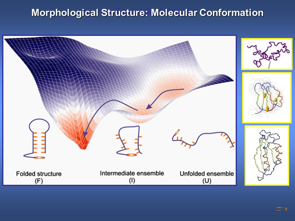Conformação Molecular Morphological Structure: Molecular Conformation