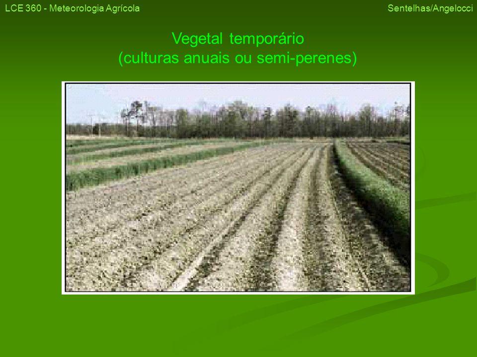 Vegetal temporário (culturas anuais ou semi-perenes)